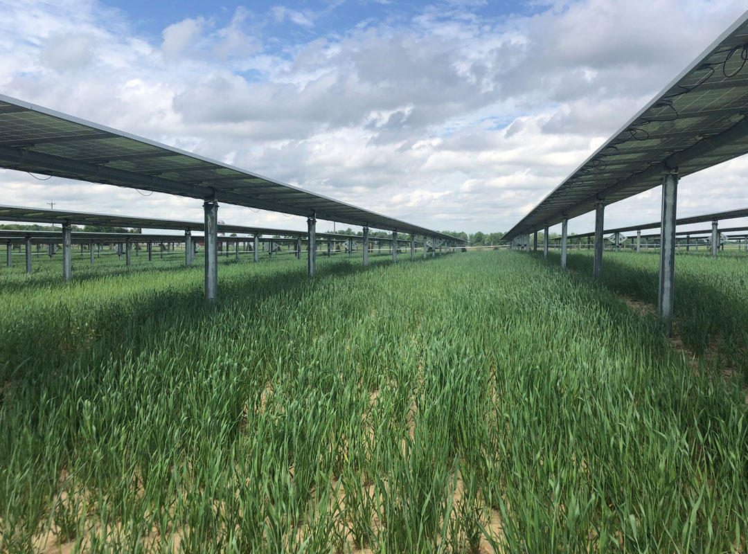 Minnesota Community Solar Field
